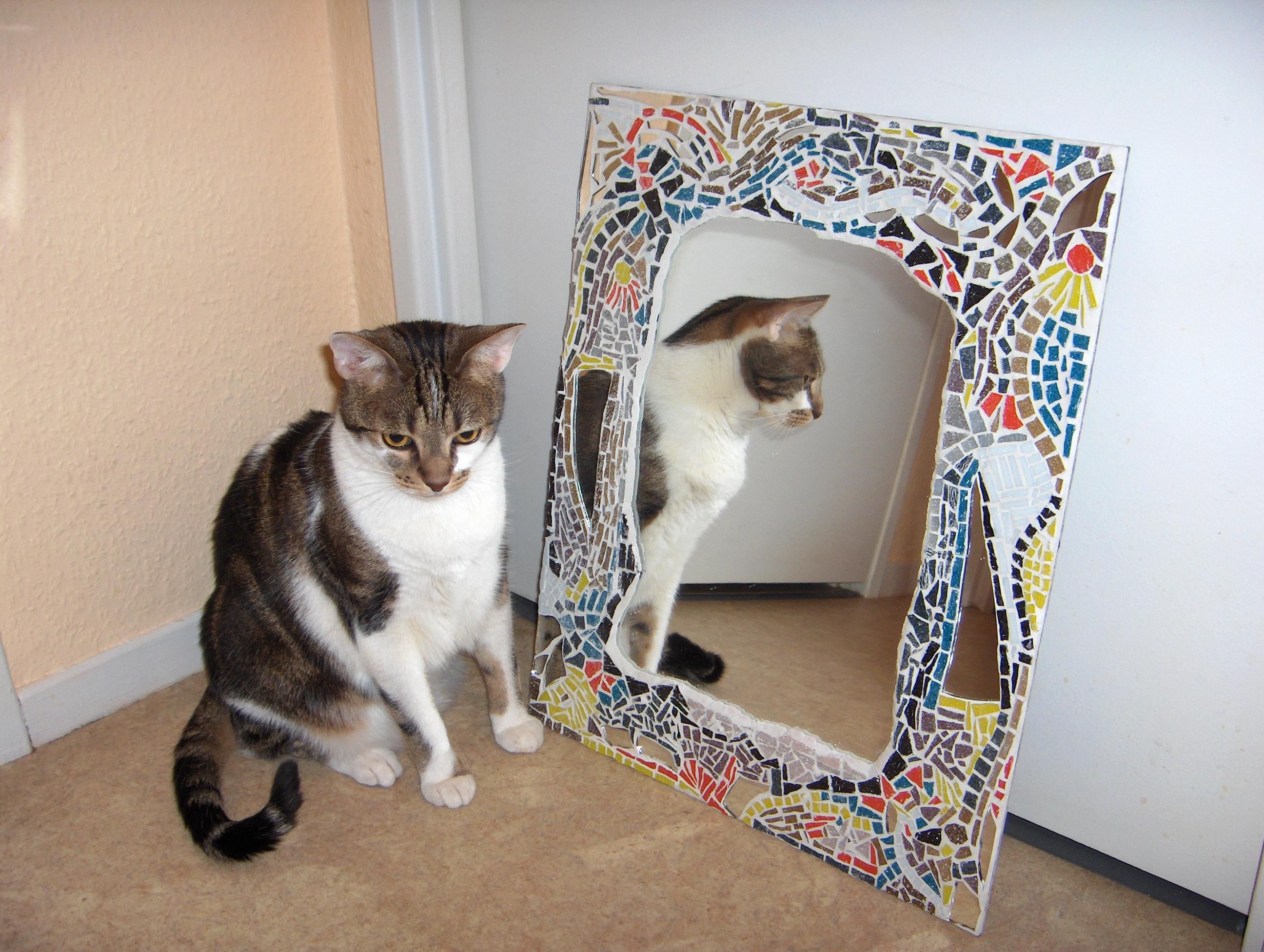 Claudine mosa ques ma premi re mosa que avec mon chat for Miroir artisanal